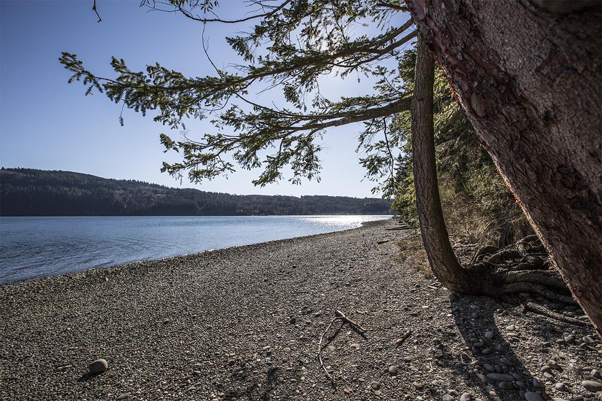 5-Beach-and-Tree
